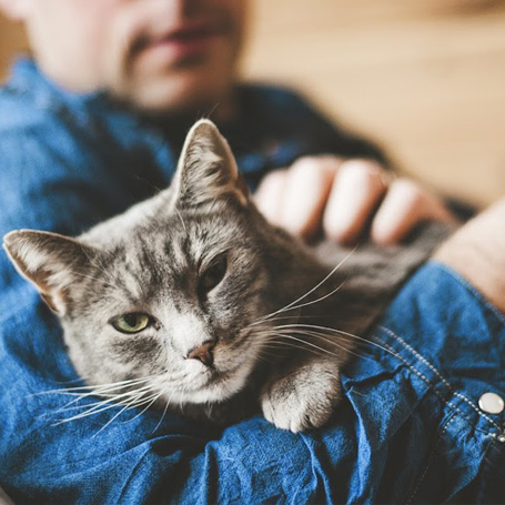 Preventative Care for Cats - Northwest Veterinary Hospital