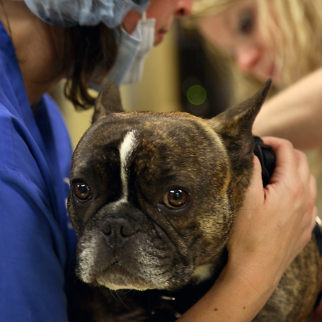 Endoscopy - Northwest Veterinary Hospital