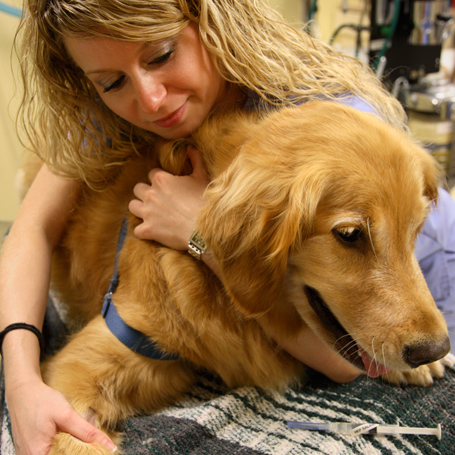 Pain Management - Northwest Veterinary Hospital